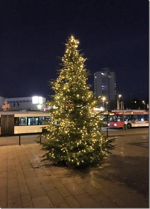 16 Weihnachtsbaum 28.11.2016 (5)