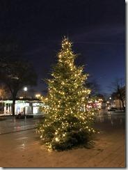 16 Weihnachtsbaum 28.11.2016 (1)