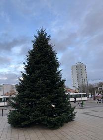 18 Weihnachtsbaum 2017 (3)